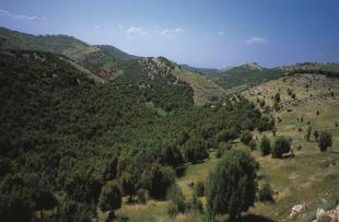 Ajloun-Hills-Visit-Jordan